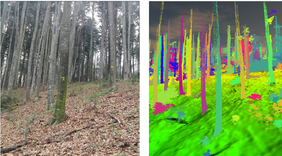 Fig.: Trees with unique ID in the field (left) and the corresponding point clouds (right) generated with TLS (Terrestrial Laser Scanner)